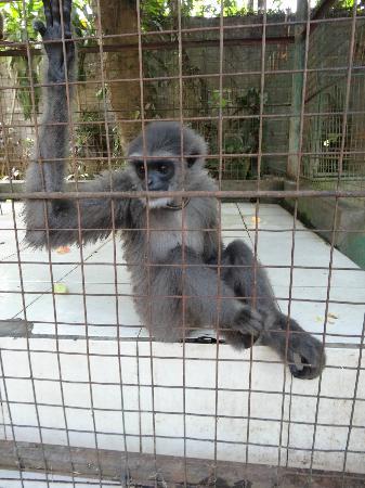 Bali Elephant Tour: monkey1