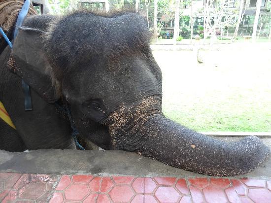 Bali Elephant Tour: sad elephant