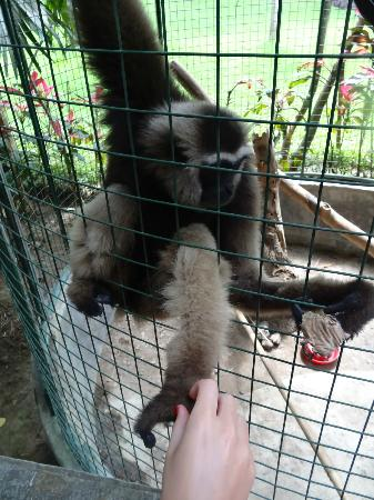 Bali Elephant Tour: monkey 2
