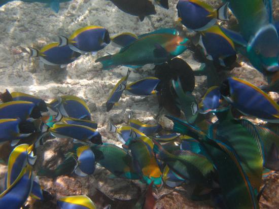 Coco Palm Dhuni Kolhu: Snorkeling
