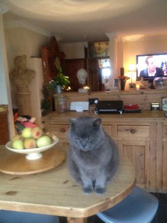 Porthcawl, UK: Elliot the Cat!