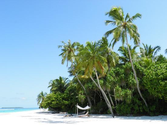 Coco Palm Dhuni Kolhu: Beach
