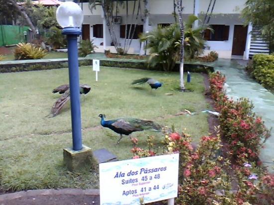 Resort Pau Brasil Praia: jardins