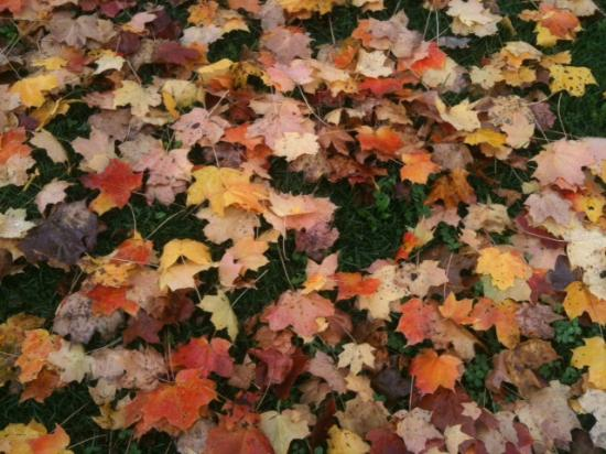 MapleStone Inn: Fall leaves