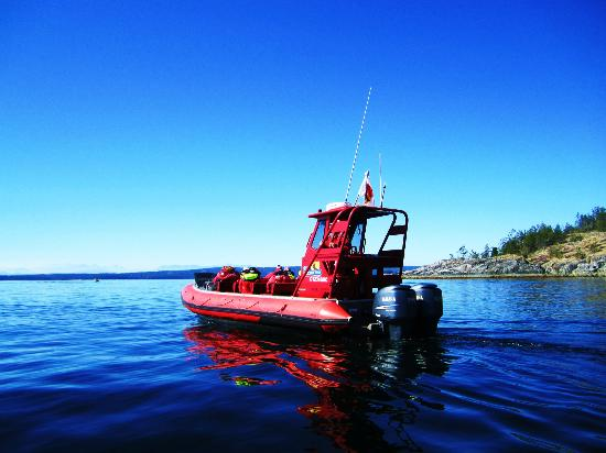 Campbell River Whale Watching and Adventure Tours: Speedy little boats!