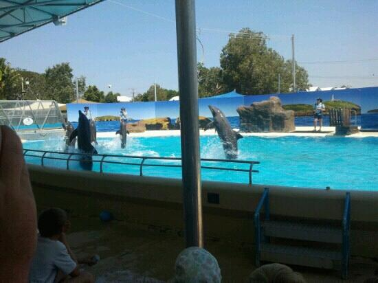 Pet Porpoise Pool - Dolphin Marine Magic: they r so smart. and no u cant swim with them, I wore my swimmers and still got knocked back