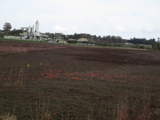 Colonial Lantern Tours: Cranberry bog that has already been harvested