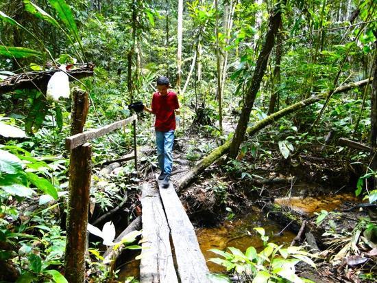 Hotel Amazonas Real : senderos x la selva