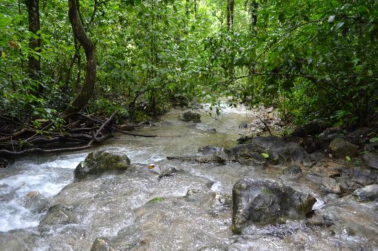 Cabo Blanco Absolute Natural Reserve: stream