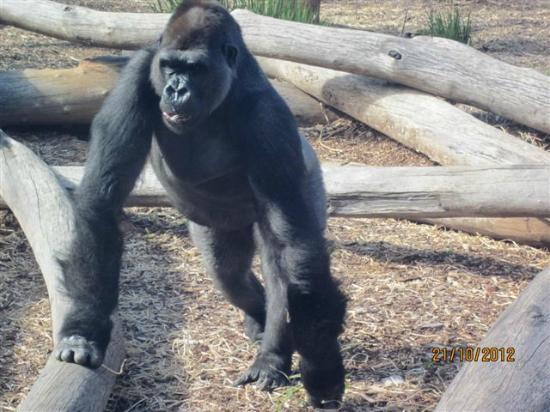 Werribee Open Range Zoo: Zoo
