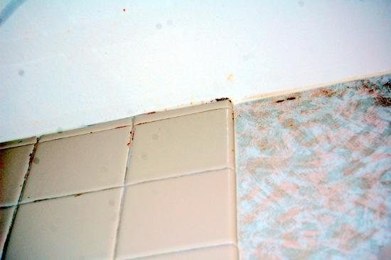Mirabeau Park Hotel: Mold in bathroom