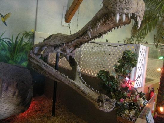Croc Talk: Croc skull