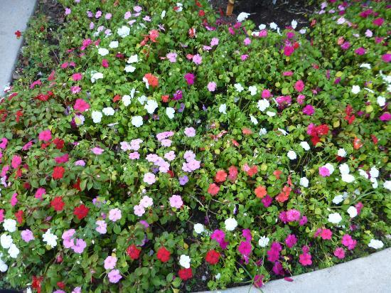 Rest Haven Motel: lovely flowers all around the Motel