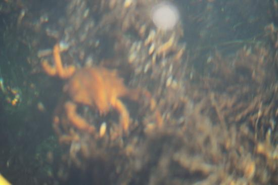 Kelp Reef Adventures: Poor photo, but across the kelp beds there was tons of aquatic creatures scurrying about.