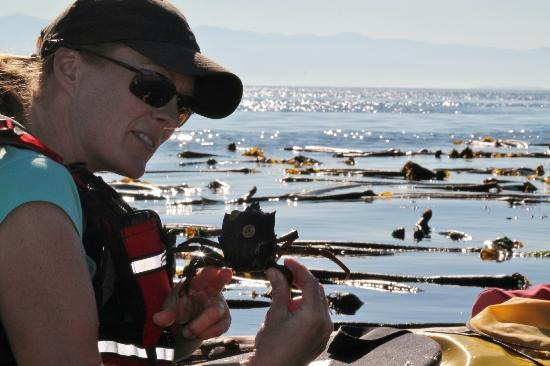 Kelp Reef Adventures: Katherine was very passionate about showing me all sorts of little critters.