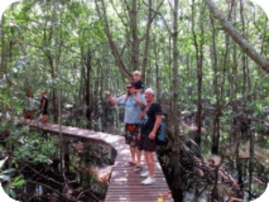 Tours Koh Taen - Private Day Tours: Wooden platform at the mangrove forests at Koh Taen