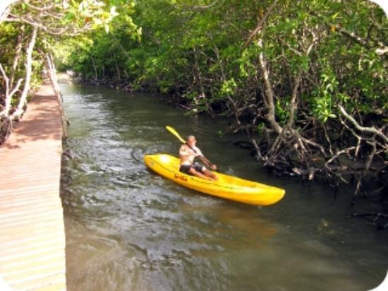 Tours Koh Taen - Private Day Tours: Sea kayaking tour at the mangrove forests