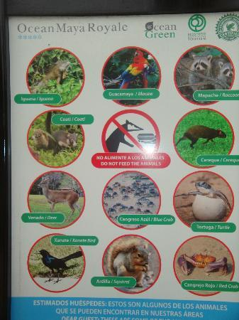Ocean Maya Royale: All the wildlife