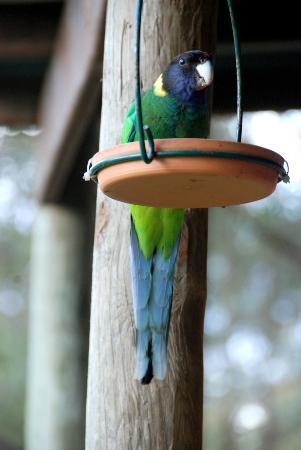 Karma Chalets and Karisma Spa: parrot at the verandah