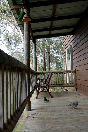 Karma Chalets and Karisma Spa: birds at the verandah