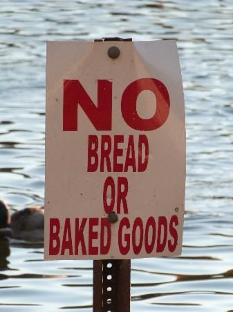 Webster Pond: what not to feed the birds