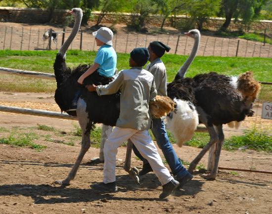 Chandelier Game Lodge & Ostrich Show Farm: Ostrich Riding