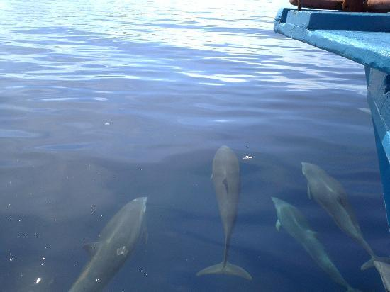 Peters Dive Resort: Dolphins