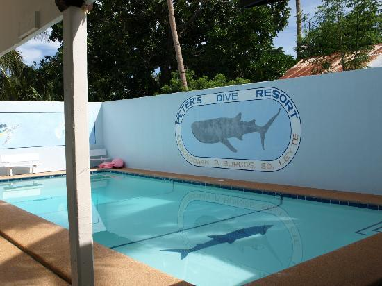 Peters Dive Resort: Swimming pool