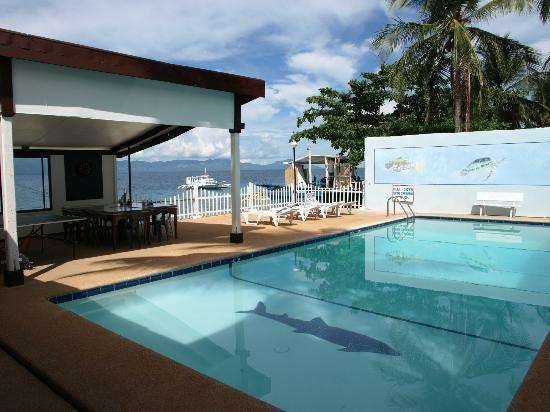 Peters Dive Resort : Swimming pool
