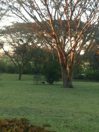 Keekorok Lodge-Sun Africa Hotels: Morning sun hits Keekerok garden before early game drive