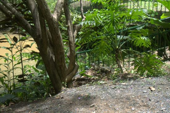 Jardin Botanico: Iguana who shocked us