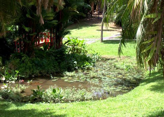 Jardin Botanico: Lily Pond