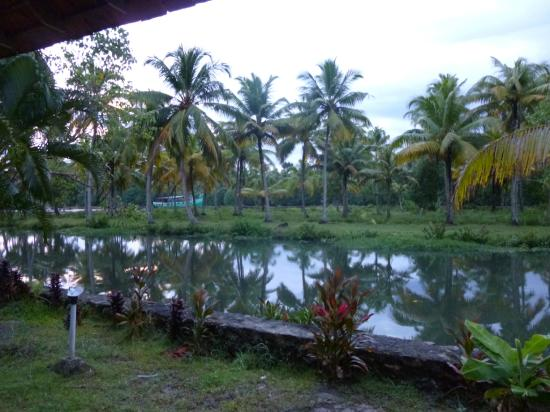 OYO 9766 Coir Village Island Lake Resort: view from the room