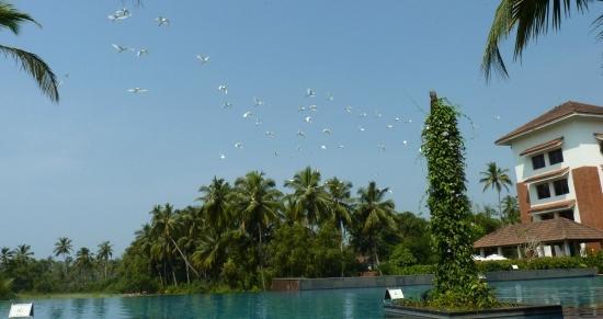 Alila Diwa Goa: Main Infinity Pool