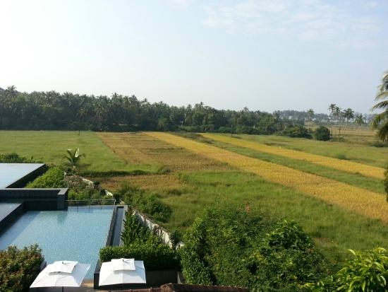 Alila Diwa Goa: View beyond Main Infinity Pool