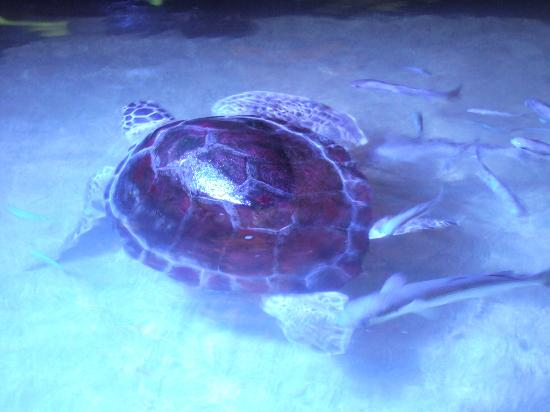 Aquaworld Aquarium & Reptile Rescue Centre: Stephania