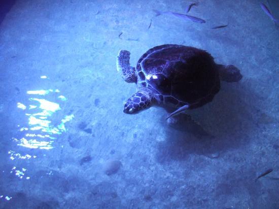 Aquaworld Aquarium & Reptile Rescue Centre: Stephania