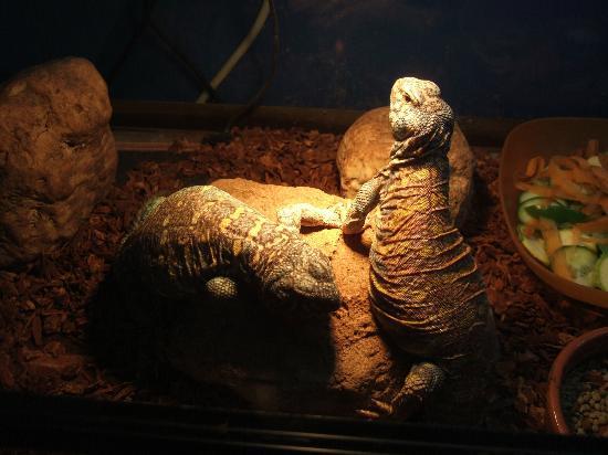 Aquaworld Aquarium & Reptile Rescue Centre: Keeping warm
