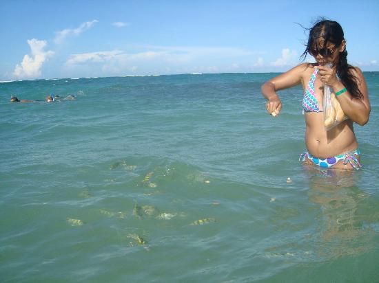 Sirenis Punta Cana Resort Casino & Aquagames: Feeding the fish