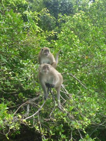 Simba Sea Trips: Monkey Island