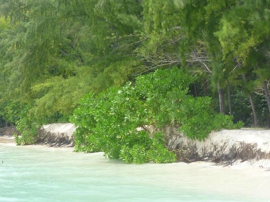 Simba Sea Trips: beach