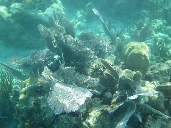 Quicksilver Snorkel Tours: Living coral