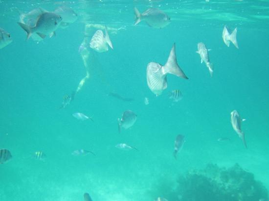 Quicksilver Snorkel Tours: more fishies
