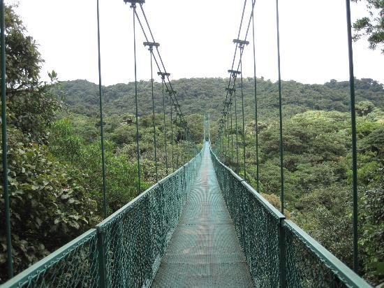 Hotel El Tucan: Hanging Bridge