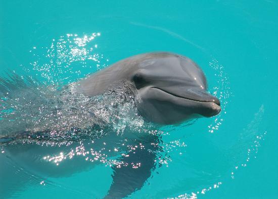Dolphinaris Cozumel : DOLPHINARIS