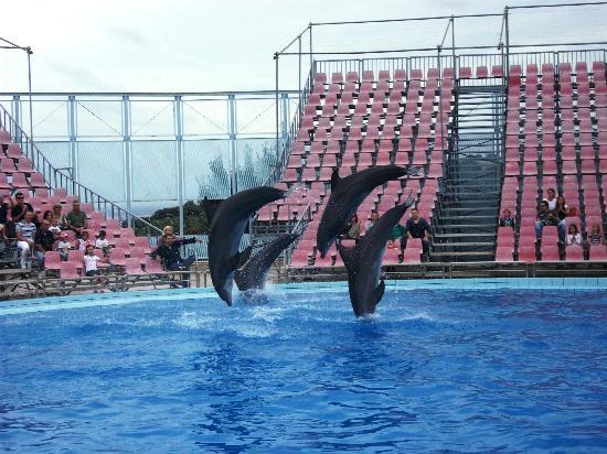 Fasano, Italy: Lo spettacolo dei delfini