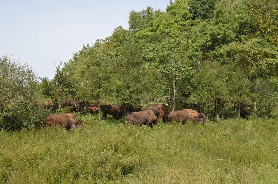 The Wilds: Gorgeous herd passes by!