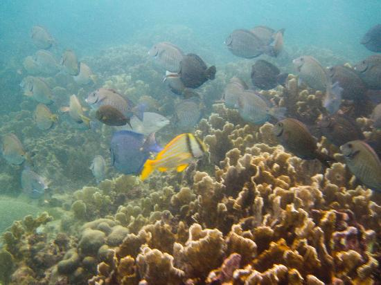 Coral Surfing Day Tours: snorkeling at zapatilla