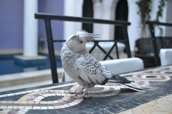 Riad Magie D'Orient: The riad's little pet