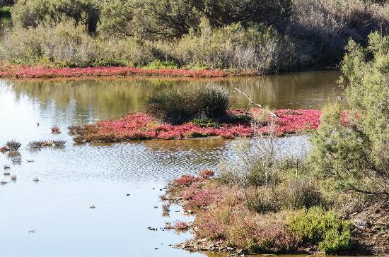 Rio Guadalhorce Nature Reserve